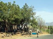 اجتماع مجلس الأمن حول تيغراي.. إصرار أوروبي ورفض إفريقي