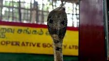 After malaria and coronavirus, British man survives deadly cobra bite too