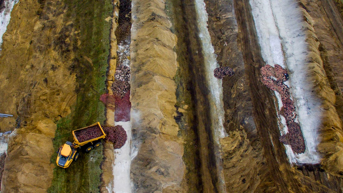This aerial view taken on November 12, 2020 shows thousands of killed mink being buried in Denmark. (AFP)
