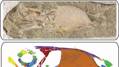 بالصورة.. كشف مذهل عن تنوع الطيور قبل ملايين السنين