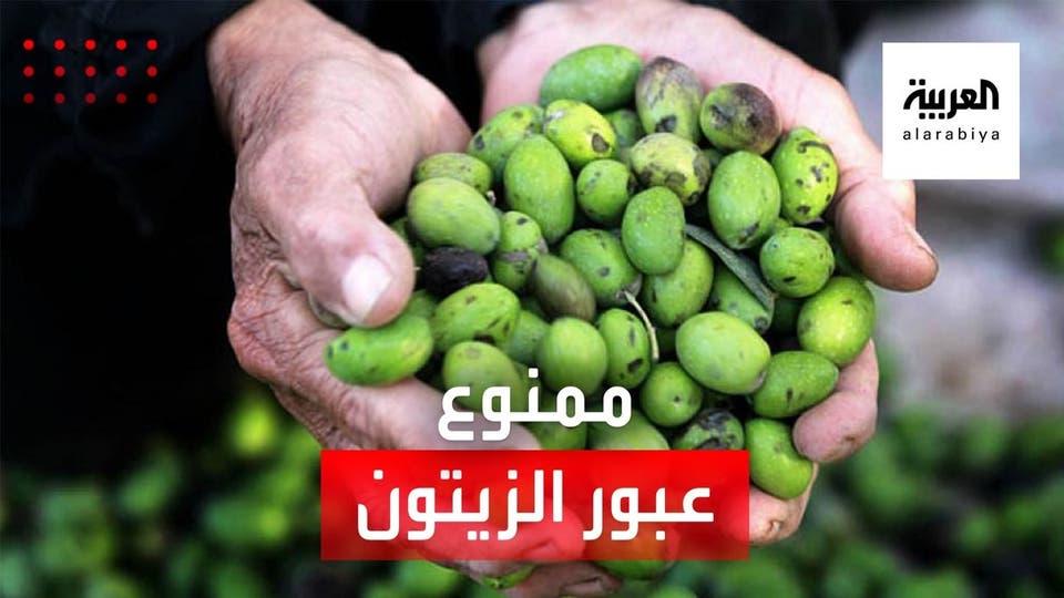 إغلاقات كورونا في العراق تكدس محصول الزيتون