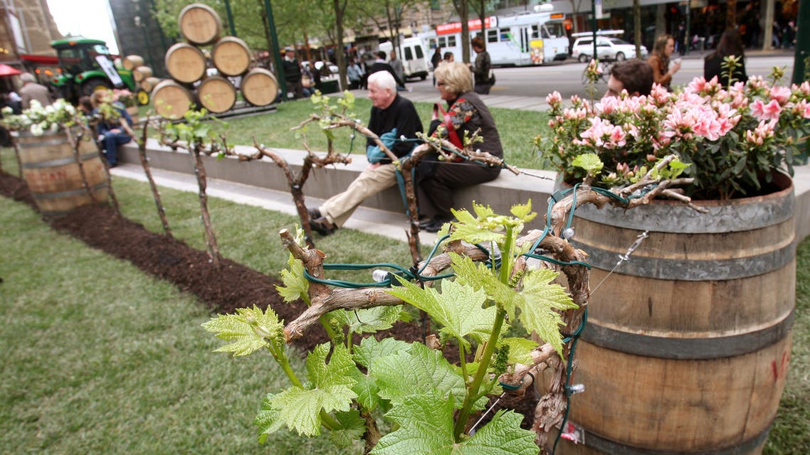 People sit nest to grapevines in Melbourne's city centre as winemaker Brian McGuigan brings a sample his vineyard to the city to tempt the locals, on October 8, 2008. (AFP)