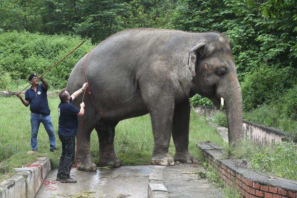 كافان الفيل الأكثر وحدة في العالم