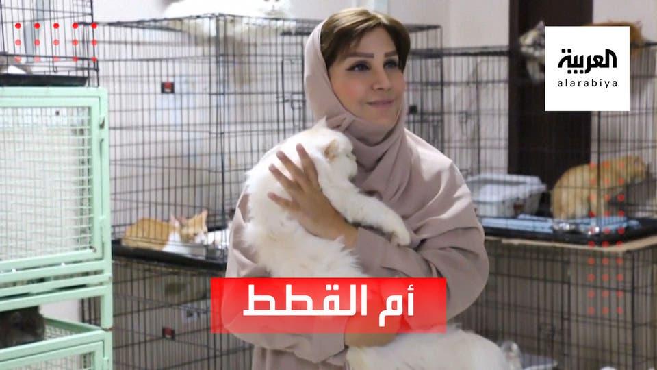 ما هي قصة مريم البلوشي مع أكثر من 480 قطة؟