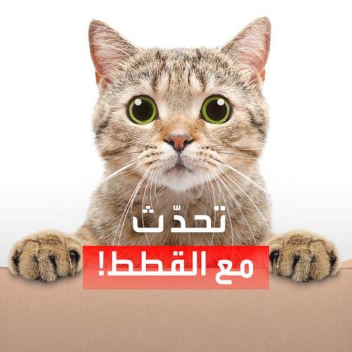 تطبيق يترجم مواء قطتك!