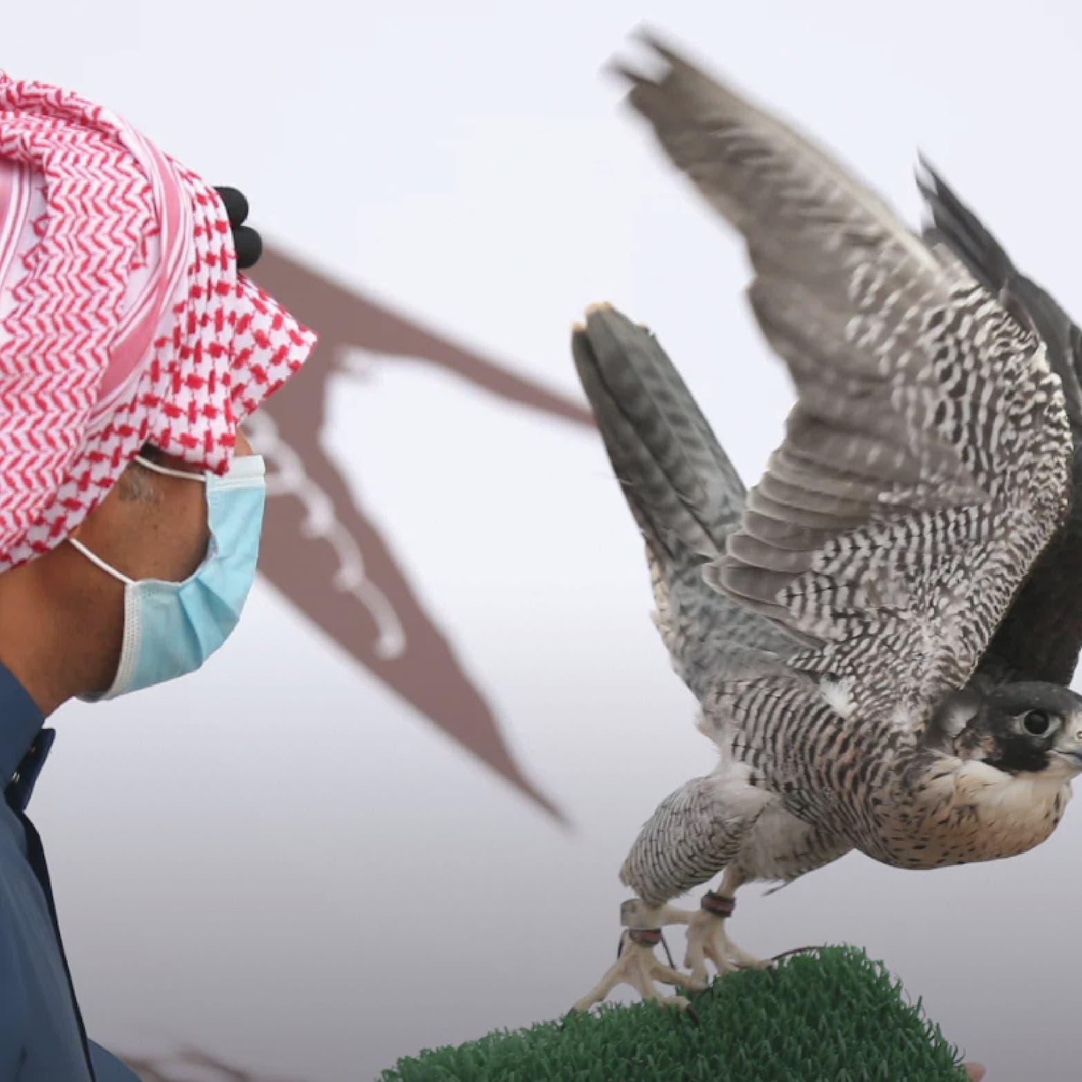 في الرياض.. هذا موعد المزاد الدولي لمزارع إنتاج الصقور