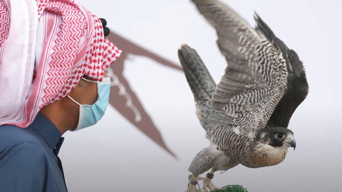 الصقور في السعودية
