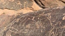 سعودي يوثق نقوشاً صخرية للخيل في تبوك