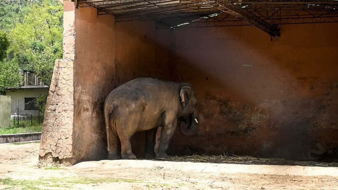 Elephant Kaavan stands under the cover of its shed behind a fence at the Marghazar Zoo in Islamabad on May 22, 2020. Music icon Cher shared her delight after a Pakistani court ordered freedom for a lonely elephant, who had become the subject of a high-profile rights campaign backed by the US singer.