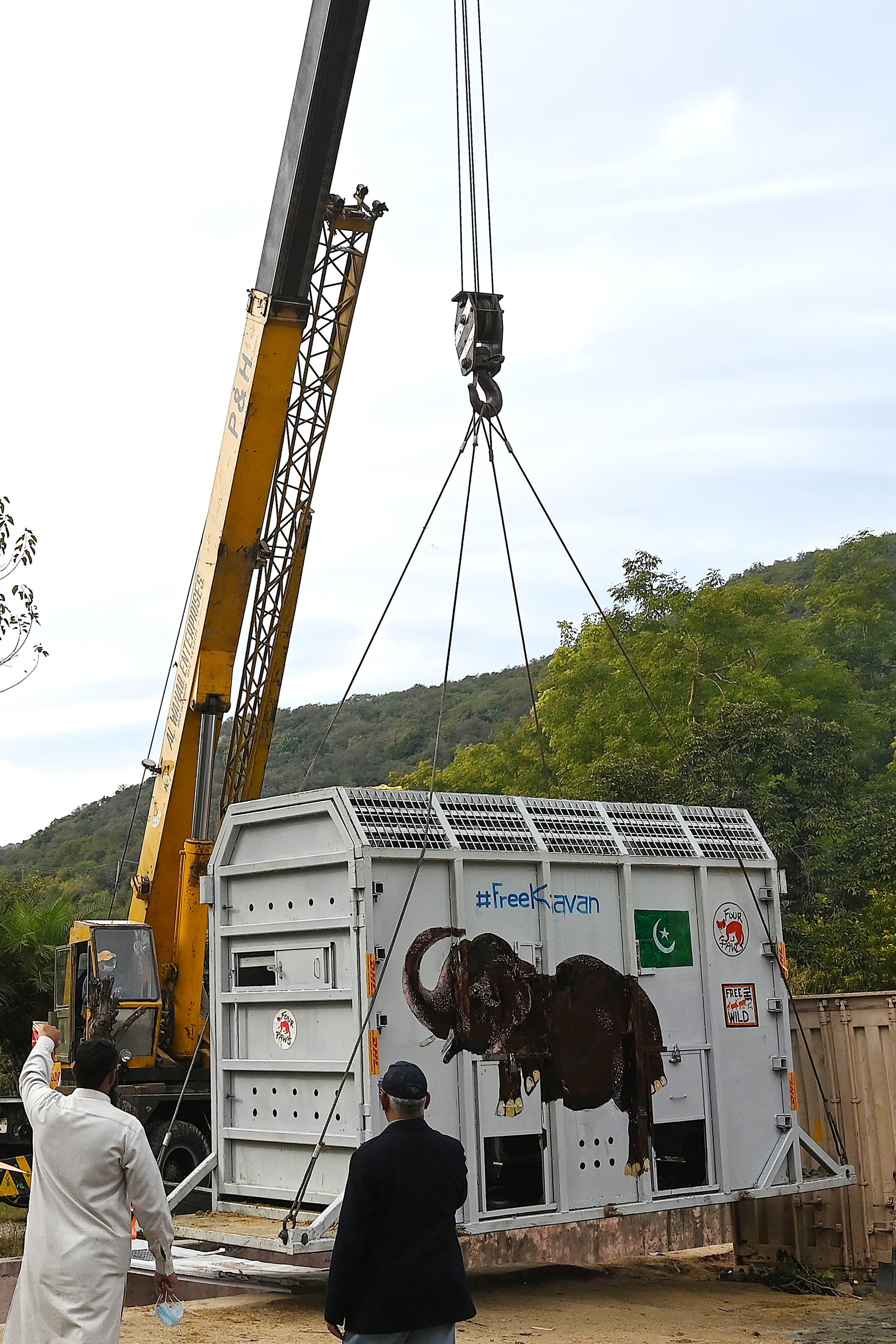 من عملية نقل الفيل