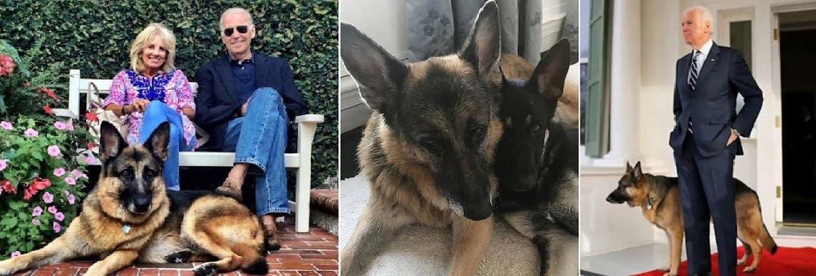 مع كلبه الثاني تشامب، المقيم معه منذ 12 سنة