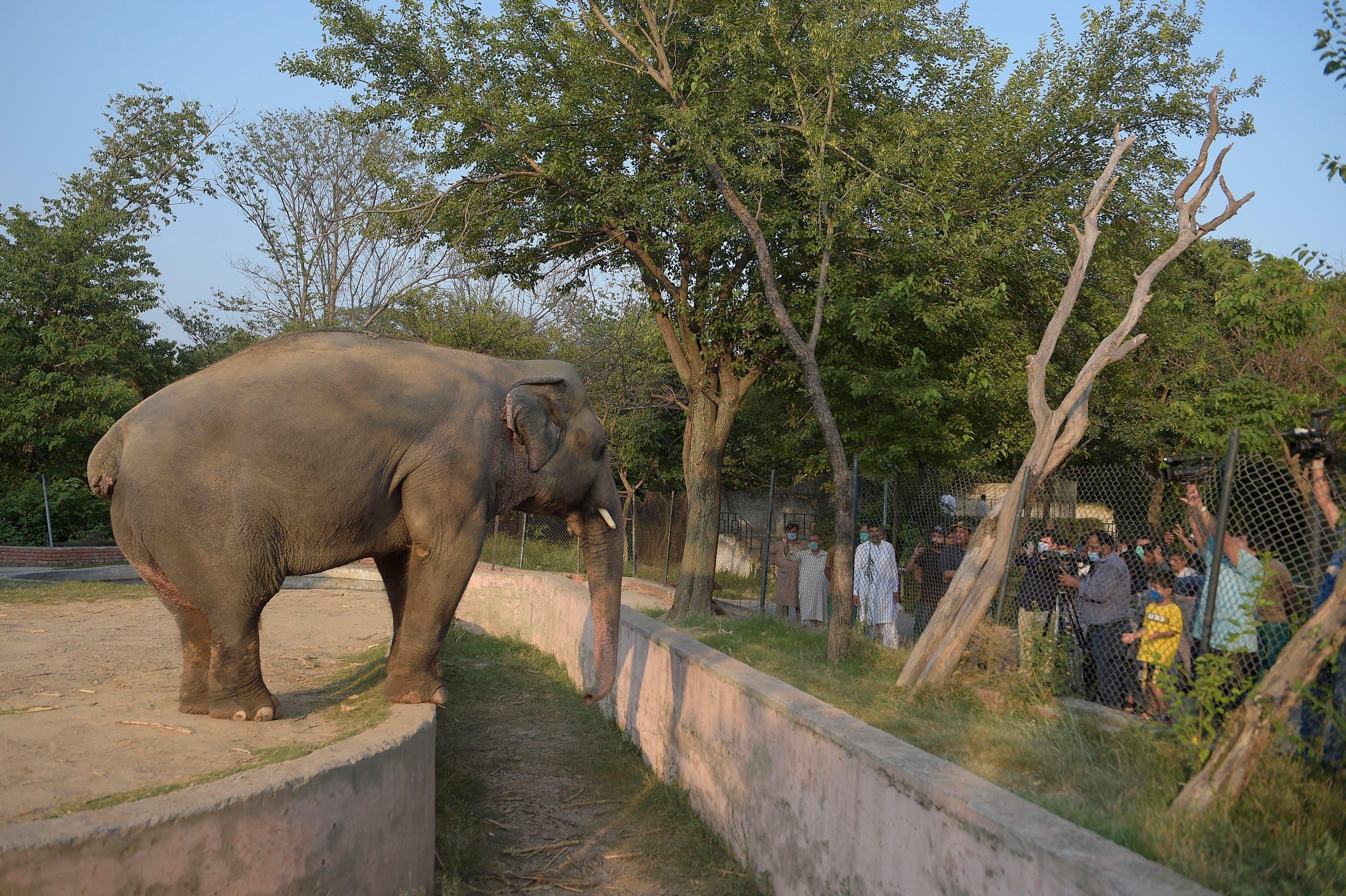الفيل كافان وحيداً في حديقة بالعاصمة الباكستانية (أرشيفية)