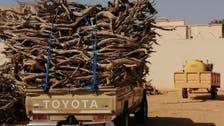 البيئة السعودية تصادر 150 طناً من الحطب المحلي في 5 مناطق