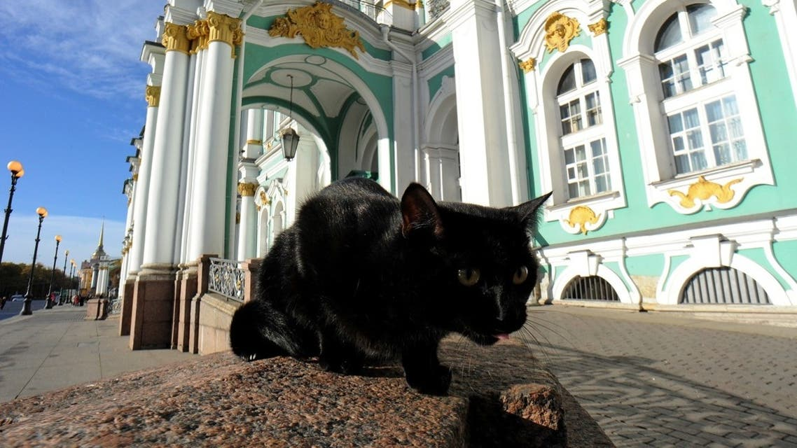 A file photo shows a cat in front of the State Hermitage Museum in Saint Petersburg. (AFP/Olga Maltseva)