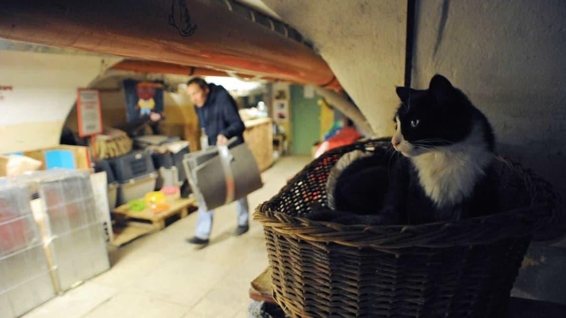 قطط متحف إرميتاج