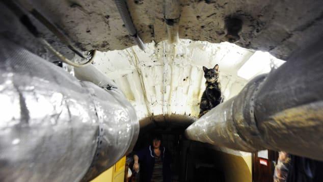القطط تطارد الفئران في قبو المتحف