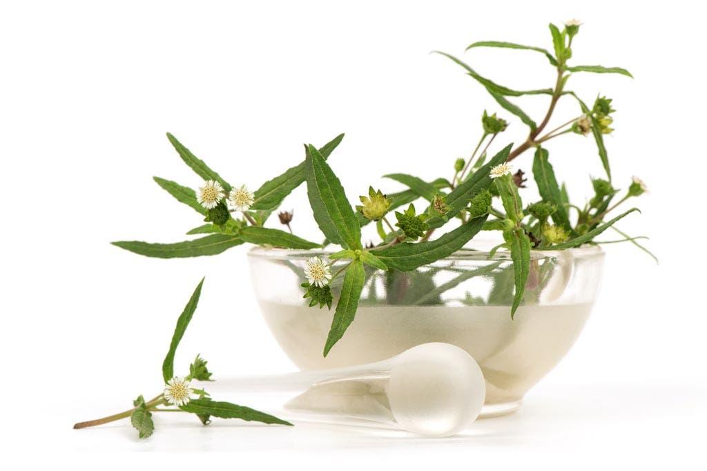 نبتة الماهاكاني التي يستخرج منها زيت البهرنجراج