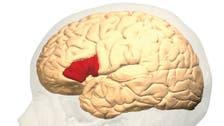 مفاتيح اللغة.. في علم النفس والأعصاب والدماغ