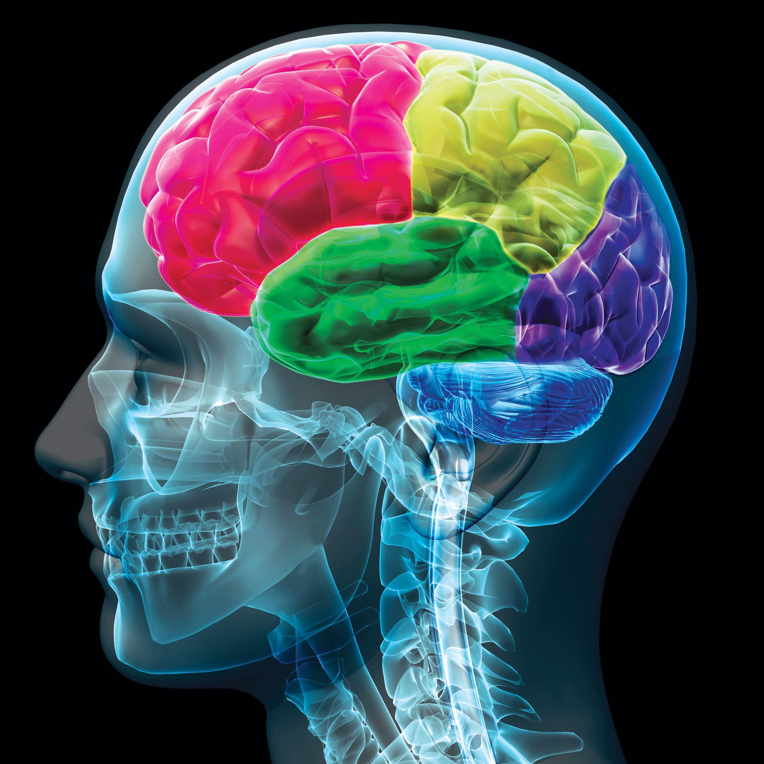 تم اكتشاف الخريطة الدماغية في أوائل القرن العشرين. وبيَّنت الدراسات أن الدماغ مجزأ إلى أقسام، يختص كل منها بأمر ما