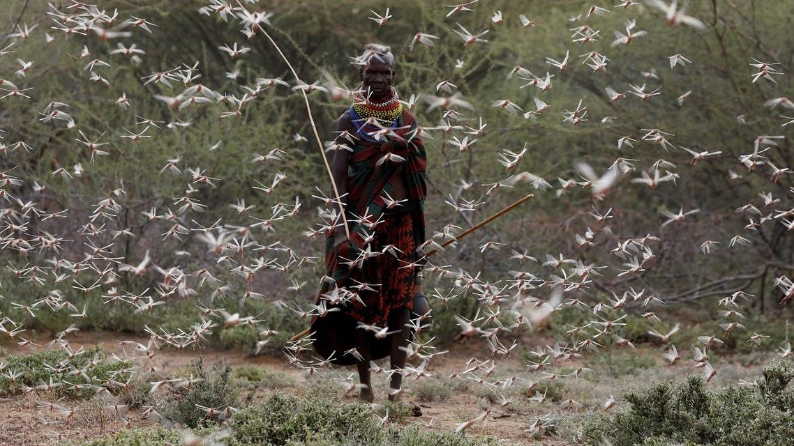 A woman from the Turkana tribe walks through a swarm of desert locusts at the village of Lorengippi near the town of Lodwar, Turkana county, Kenya. (Reuters)