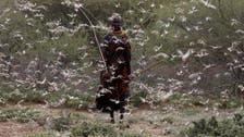 Fresh wave of crop-ravaging locust swarms threaten E. African herders, farmers