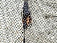 """الجرائم تتزايد داخل """"الهول"""".. مجهولون يغتالون عراقيا أمام خيمته"""