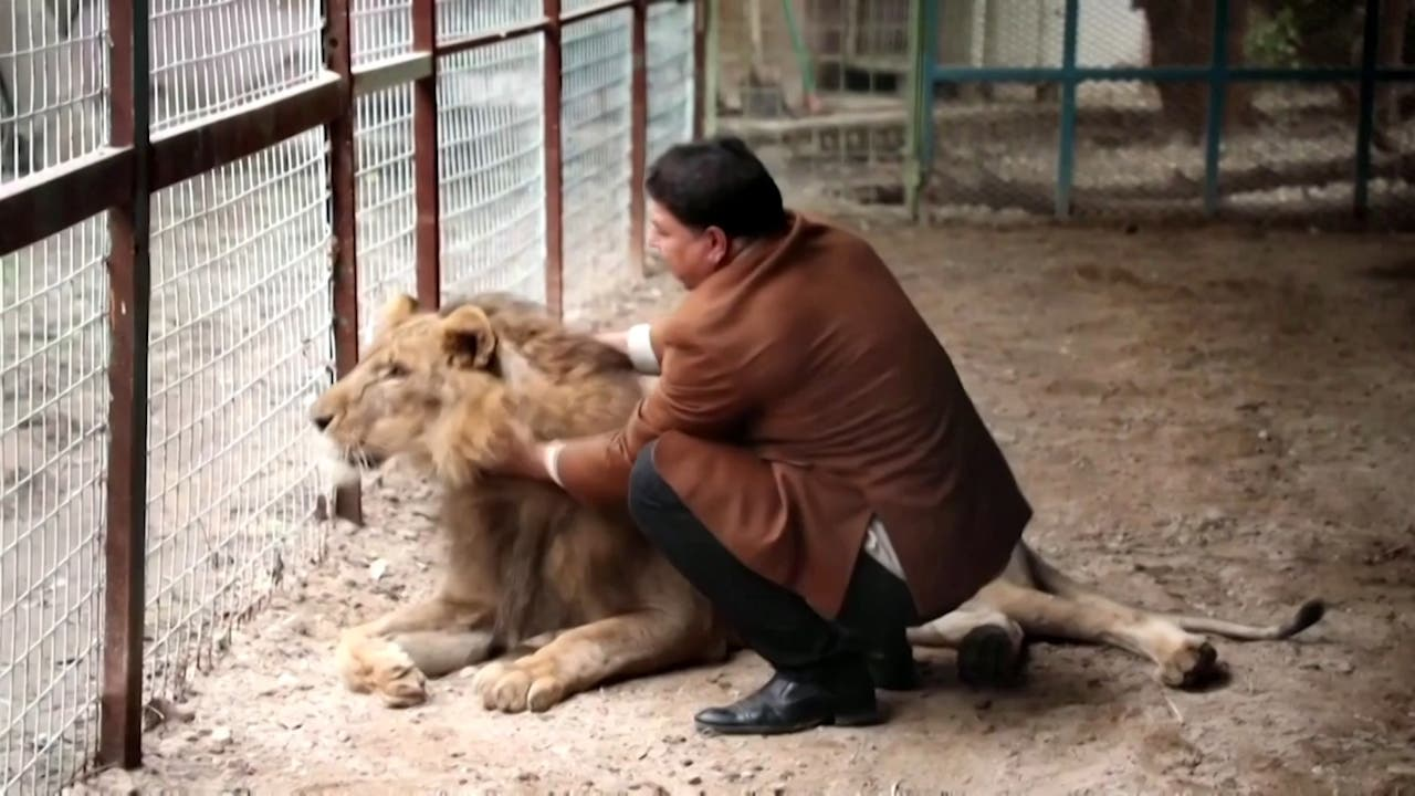 Ghali al-Marajlah with one of his lions. (Reuters)