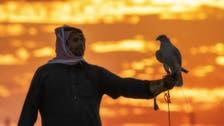 سعودی فوٹو گرافر کو اتفاقیہ ہاتھ لگنے والے شاہین کی تصاویرکی سوشل میڈیا پر دھوم