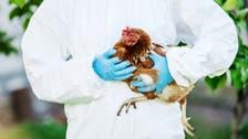 نفوق ملايين الطيور.. سلالات قاتلة من الإنفلونزا تتفشى بأوروبا