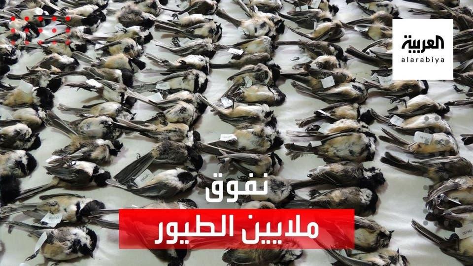 أوروبا فقدت 350 مليون طائر منذ أكتوبر الماضي.. ما السبب!!