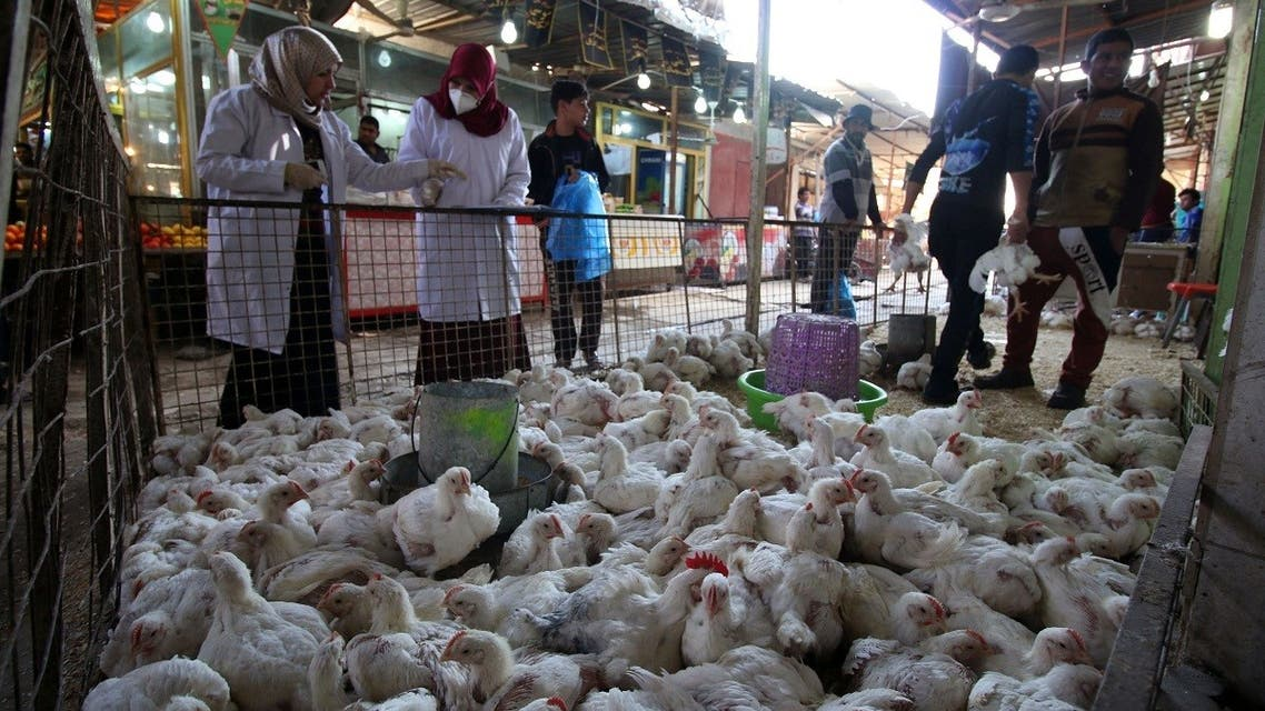 A file photo shows Iraqi vets check chickens that entered Iraq from Turkey at a market in the southern port city of Basra on February 25, 2016. (Haidar Mohammed Ali/AFP)