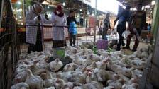 Iraq scrambles to contain bird flu outbreak among livestock
