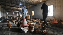 China reports first human case of H10N3 bird flu, spreading is low risk