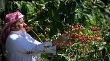 جنوبی سعودی عرب میں 'الخولانی' کافی کے 8 صدیوں پرانے باغات