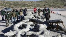 شاهد شجرة عثروا عليها باليونان اتضح أن عمرها 20 مليون عام