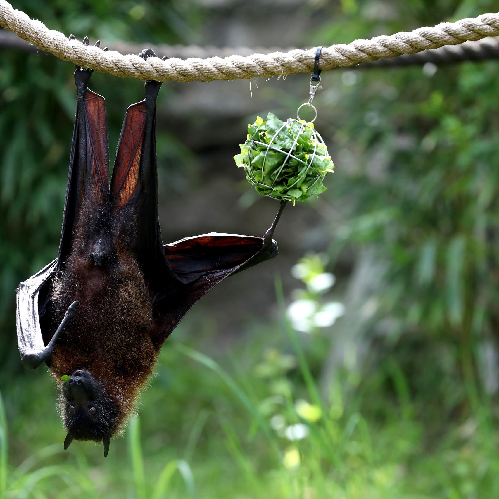 Nipah virus 'is a cause of concern, lessons should be learned from COVID-19': experts