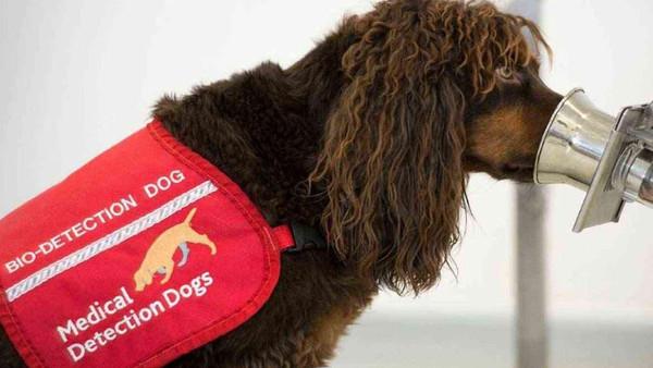جرمنی میں سونگھنے والے کتوں کی مدد سے کرونا کے مریضوں کی کامیاب تشخیص