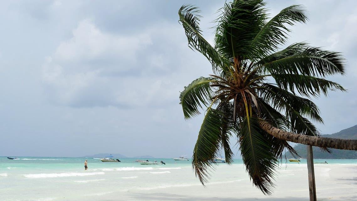 View a palm tree on a beach on Praslin island, Seychelles (AFP)