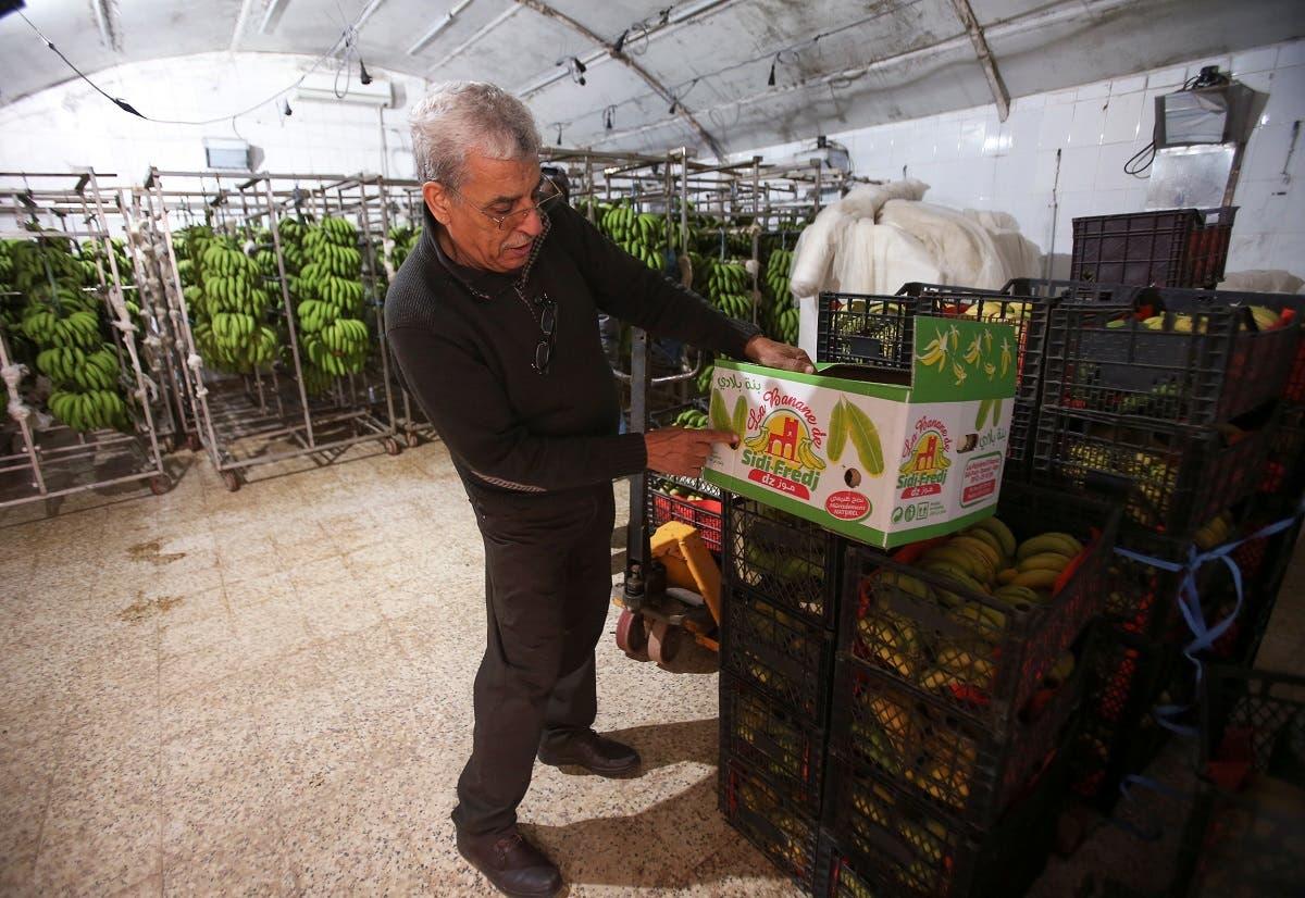 Farmer Mostefa Mazouzi displays a box of bananas at his banana farm in Sidi Fredj. (Reuters)