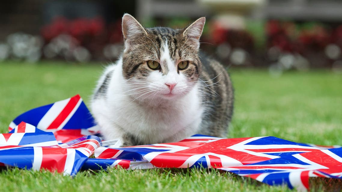 Larry the Downing Street cat sits with bunting in the garden of number 10 Downing Street in London June 1, 2012. Four days of celebrations to mark Queen Elizabeth's 60 years on the throne will start on Saturday. REUTERS/Ki Price (BRITAIN - Tags: POLITICS ANIMALS SOCIETY ROYALS ENTERTAINMENT)