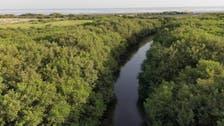 مینگروو کے جنگلات 'تاروت' کے ساحل پر مہاجر پرندوں کا مسکن