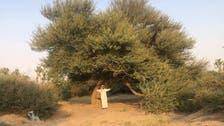 سعودی شہری کا 26 سال سے صحرائوں کو نخلستانوں میں بدلنے کا مشن