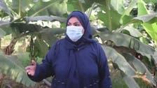 ایک لاکھ کیلے کے درختوں پر مشتمل زرعی فارم کی سعودی مالکن سے ملیے