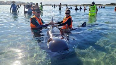 لغز يحير العلماء.. جنوح عشرات الحيتان رغم جهود إعادتها للبحر