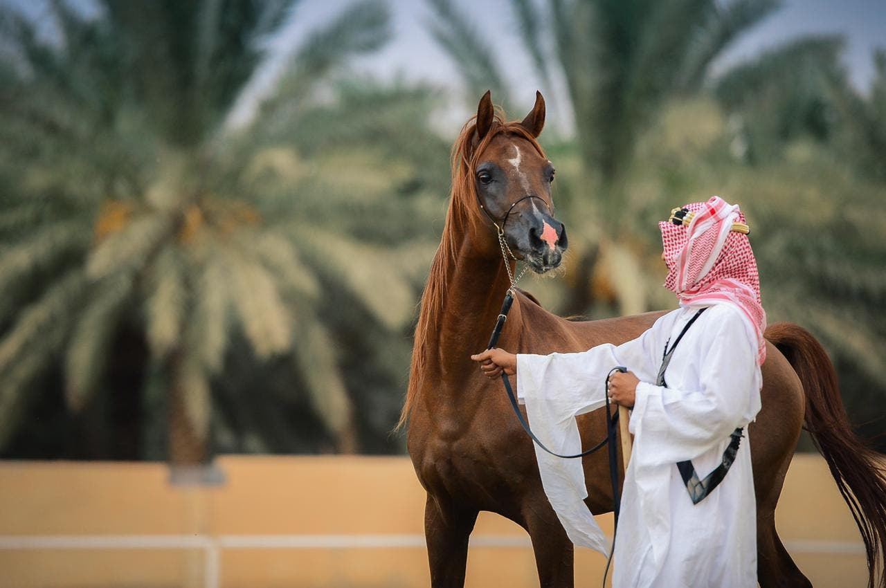 For this reason, a Saudi excels in photographing Arabian horses