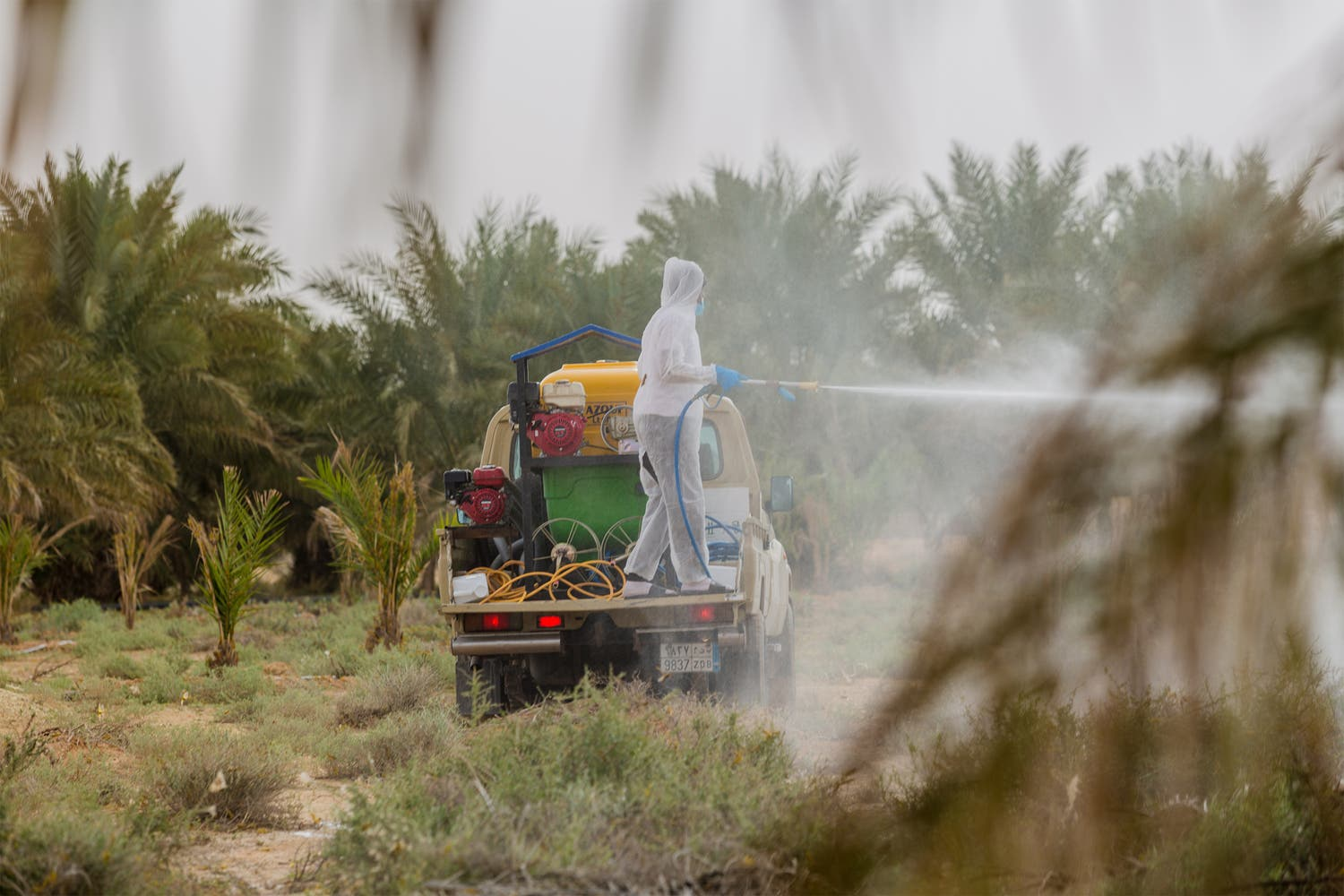 More than 15 thousand scientific spraying to control locusts in Saudi Arabia within a year