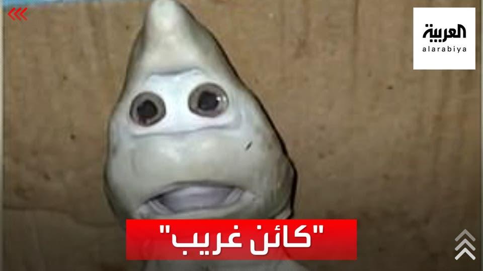 العثور على كائن يشبه الإنسان.. داخل بطن سمكة قرش