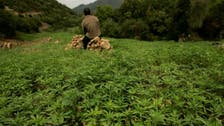 Morocco considering legalizing medicinal cannabis for therapeutic use