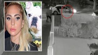 شاهد عملية سطو دموي على كلبين لليدي غاغا قرب لوس أنجلوس
