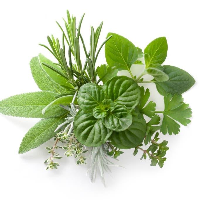 نبات شهير يحميك من الزهايمر والخرف